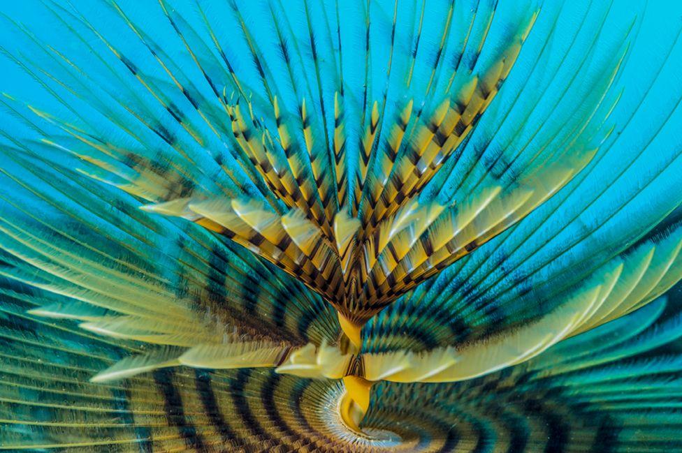 Espiral por Marco Gargiulo, Italia