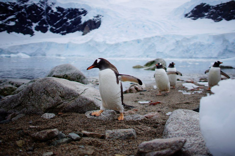Penguins walking along a beach