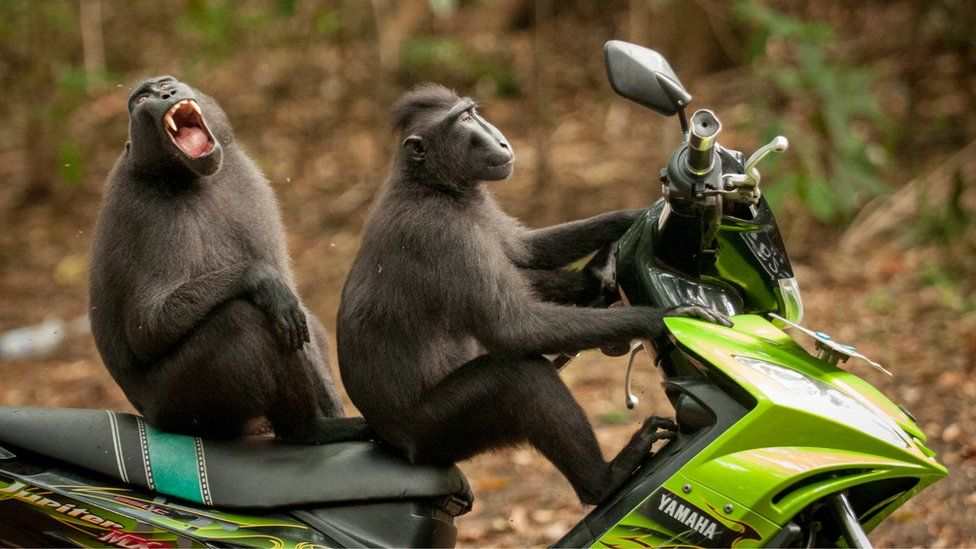 Дві мавпочки на мотоциклі, two monkeys on a motorbike. Photo: Katy Laveck-Foster
