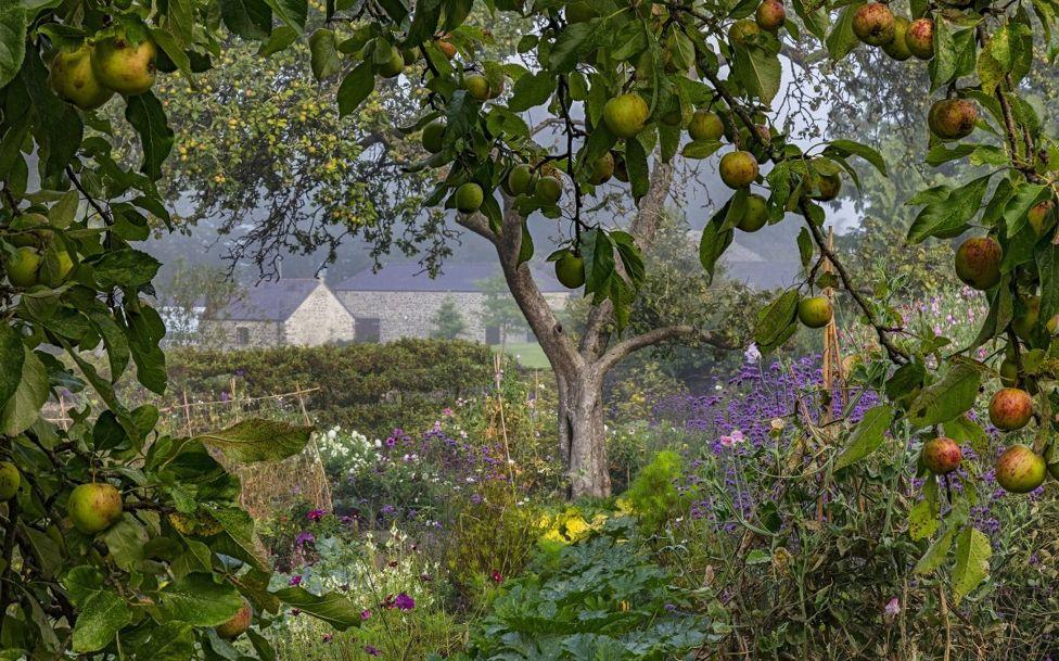 Un jardín silvestre con manzanos y flores.