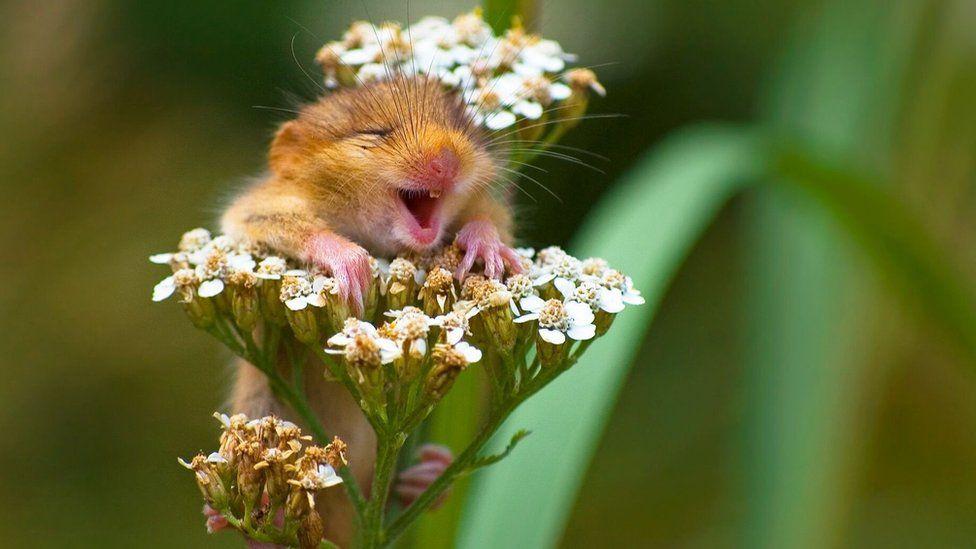 Arganaz sorridente