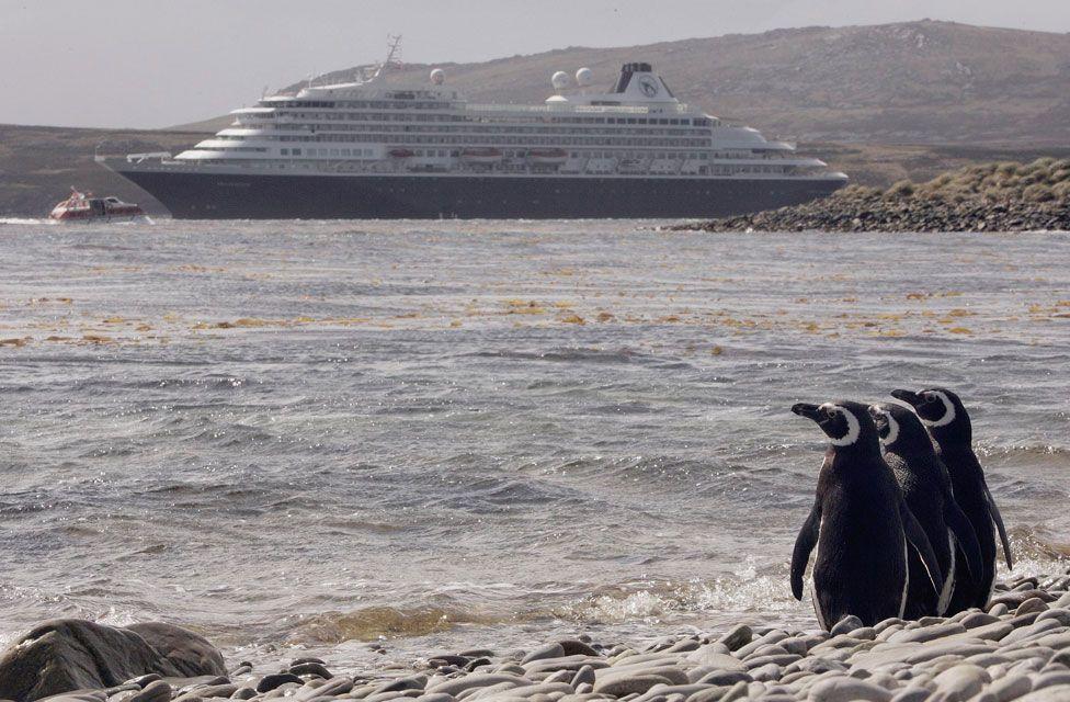 Penguins observe a cruise ship