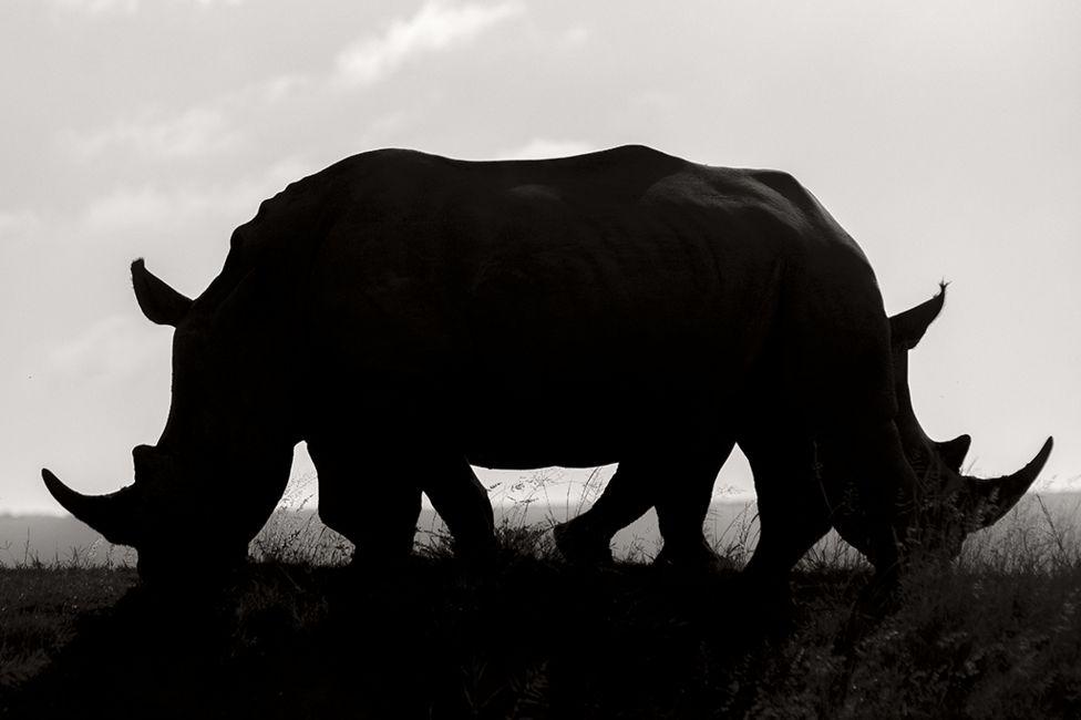 Confusión por Rudi Hulshof, Sudáfrica