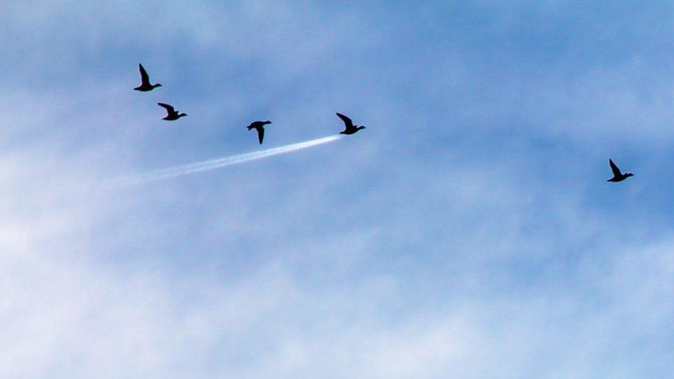 Птахи в польоті, birds flying. Photo: John Threlfall