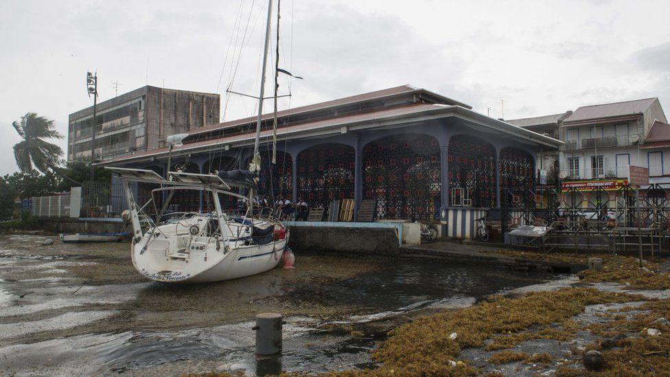 Guadalupe Adası da Irma'dan etkilendi.