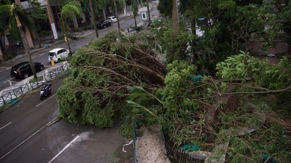 澳门街上树木被连根拔起(中新社图片23/8/2017)