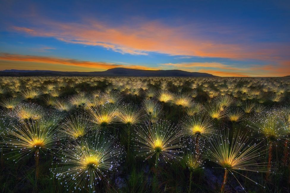 Luminescent flowers beneath a sunrise