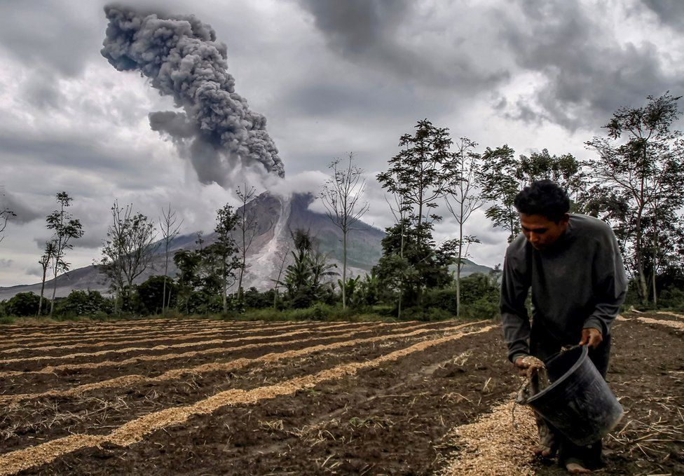 A farmer fertilizes his farm as Mount Sinabung volcano erupts behind him.