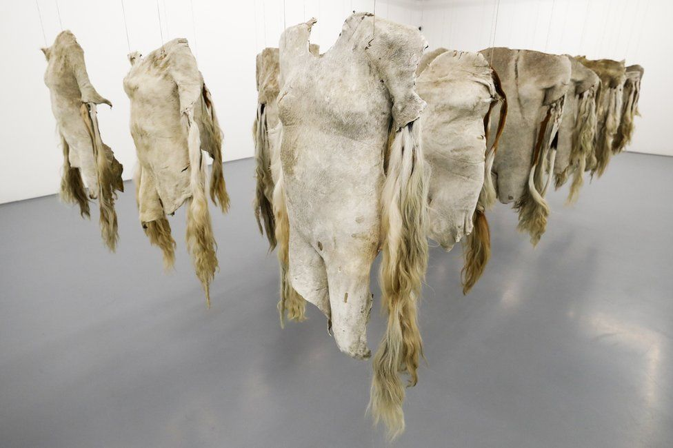 An installation by South African artist Nandipha Mntambo using cow hides on exhibit at the Zeitz Museum of Contemporary Art Africa.