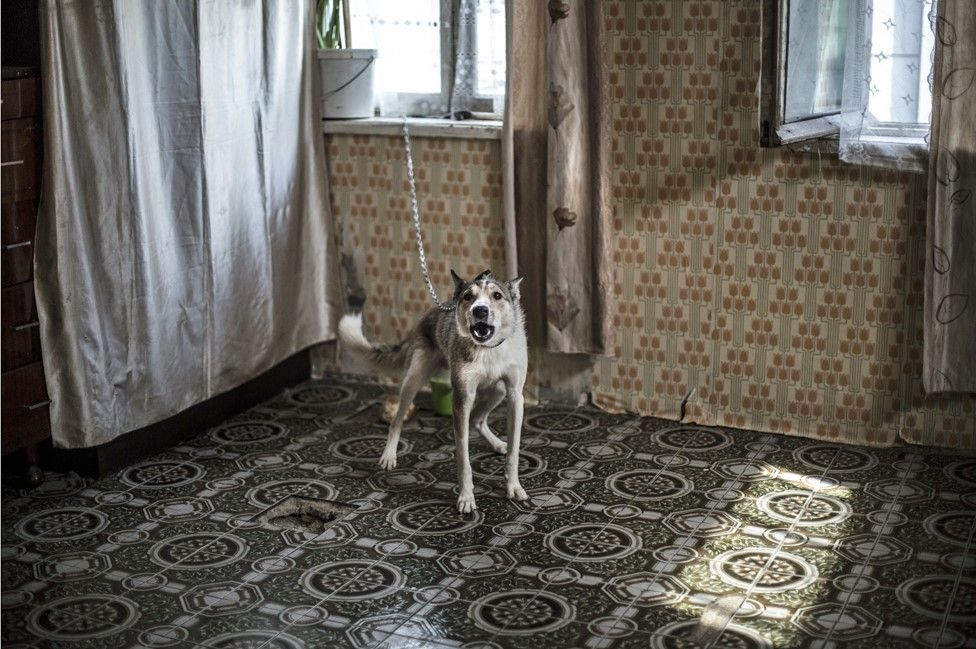 A pet dog is kept chained in the kitchen of one of the units
