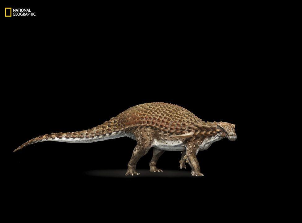 Ilustración del nodosaurus