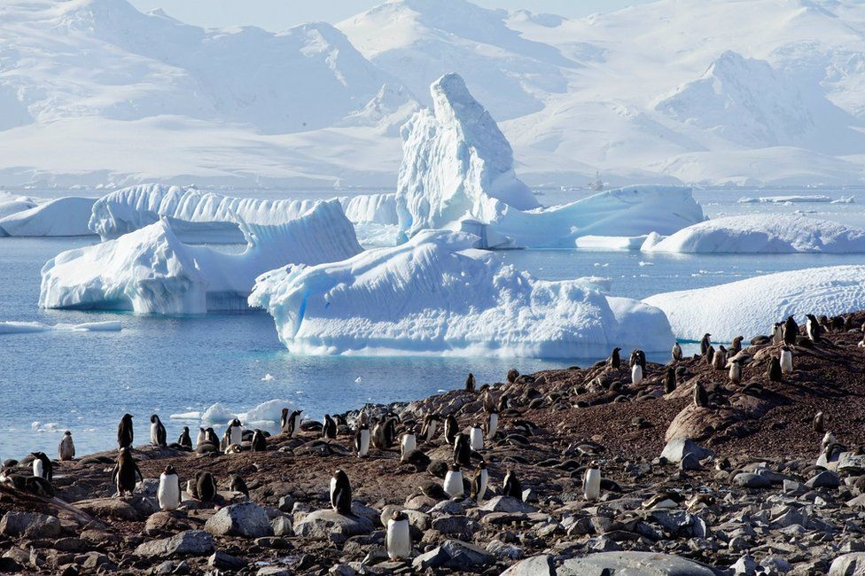 A large group of penguins on the beach