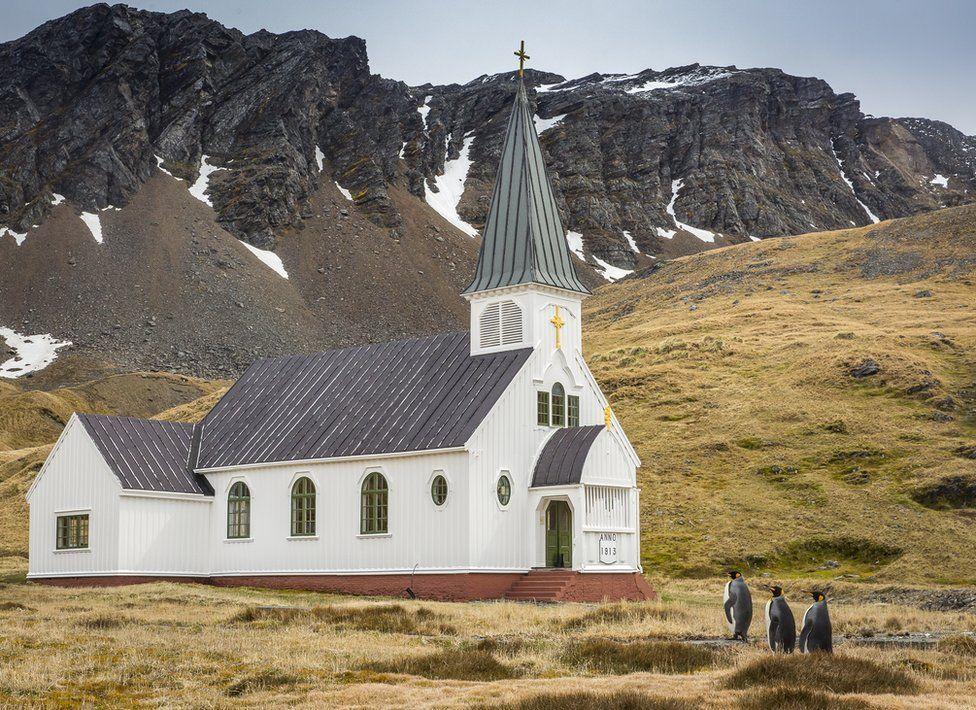 Пінгвіни біля церкви, penguins. Photo: Carl Henry.