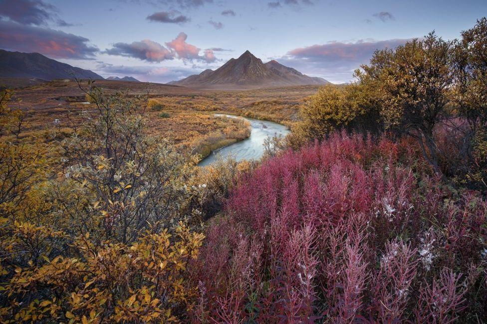 Un paisaje con un río, plantas amarillas y rojas y una montaña en el fondo.