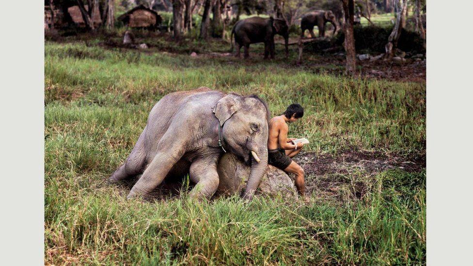 Чіангмай, Таїланд, 2010
