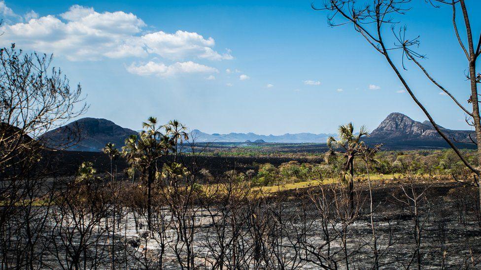 Área atingida pela queimada