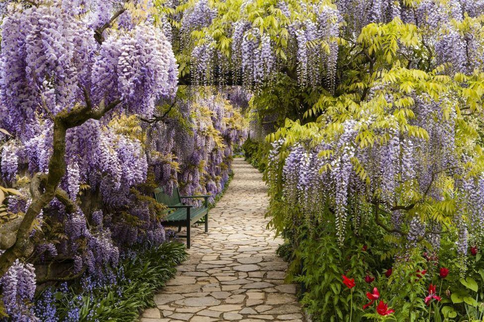 Camino de piedra con flores lilas a ambos lados.