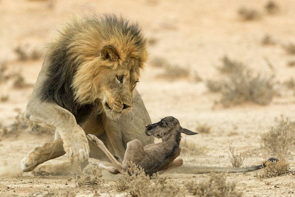 La mirada de la muerte por Johan Kloppers, Sudáfrica