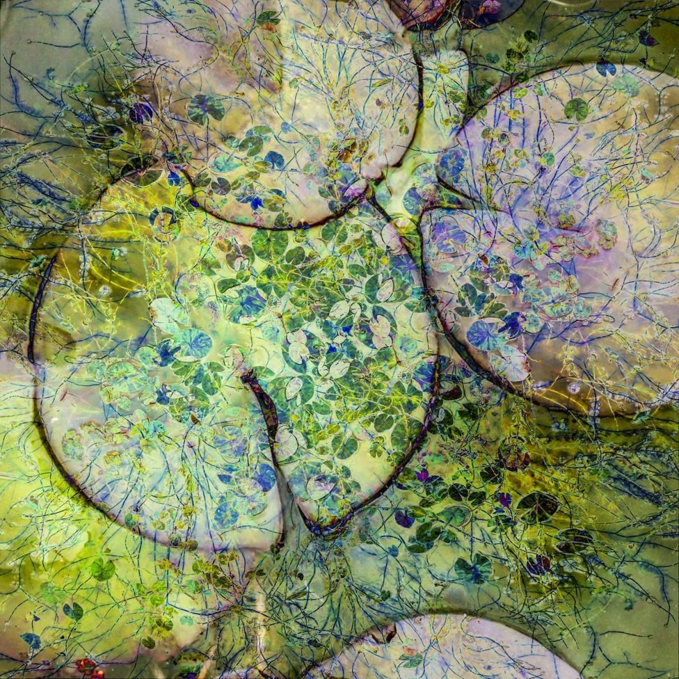 Una foto compuesta mostrando nenúfares en colores verde y púrpura.