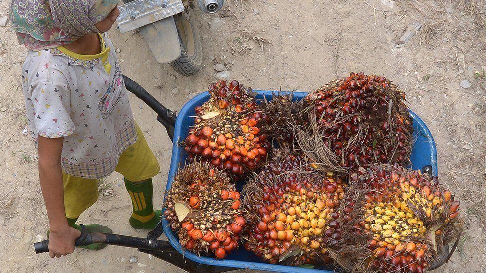 kelapa sawit Indonesia