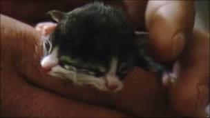 Gato bicéfalo (foto AP/WCHS TV)