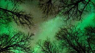 Лес в лучах полярного сияния