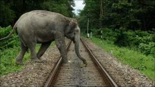 Слон на индийской железной дороге
