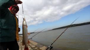 Рыболов показывает рыбу, выловленную из Дуная