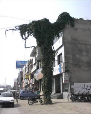 واپڈا کے پول پر درخت