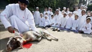 Урок в египетской школе по закалыванию барана
