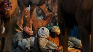 Торговцы верблюдами