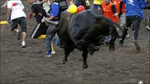 ثور يركض خلف مجموعة من الشباب في مهرجان سنوي لمصارعة الثيران في كوستاريكا