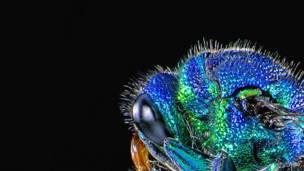 Фотогалерея: Наука под микроскопом
