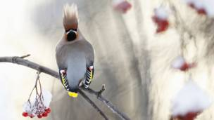 Pássaro. Foto: GDT International Nature Photography Festival/Markus Varesvuo