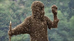 Судді визначали, на кому більше бджіл