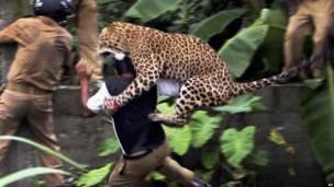 Нападение леопарда