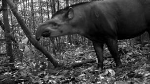 Фотопроект организации Conservation International