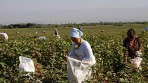 کشاورزان تاجیک