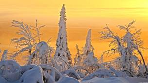 Bosque boreal en Finlandia