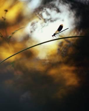 Foto: GDT EWPY 2011, Constant Couteille