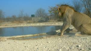 Foto: Ken Stratford, Ongava Research Centre