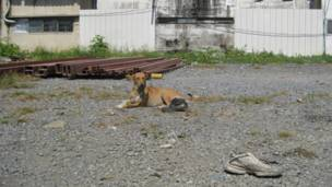 A homeless dog basks in noon's sun nearby Mochit BTS terminal