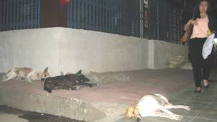 Homeless dogs are sleeping undisturbed by passers-by and surrounding noises