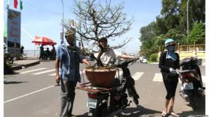 Người dân mua cây Tết ở Phan Thiết