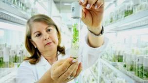 Investigadora en los laboratorios del CIAT en Colombia