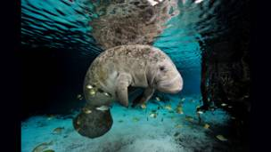 Foto: Brian Skerry/Nat Geo Stock/Caters