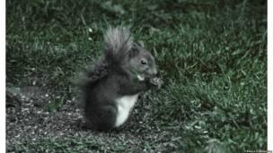 Esquilo (Foto Charles Deeming e Tom Pike)