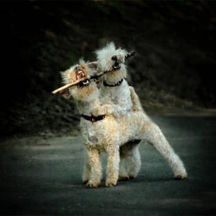 Los perros de Paul Walker
