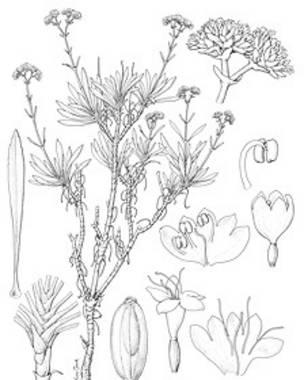 Los artistas que traen plantas a la vida  BBC Mundo