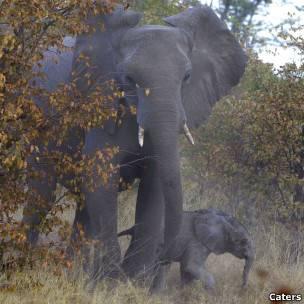 Elefanta e seu filhote (Caters)